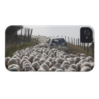 tuscany farmland road, car blocked by herd of iPhone 4 Case-Mate case