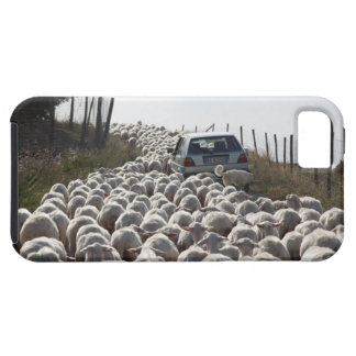 tuscany farmland road, car blocked by herd of iPhone SE/5/5s case