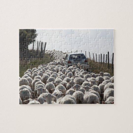 tuscany farmland road, car blocked by herd of jigsaw puzzle