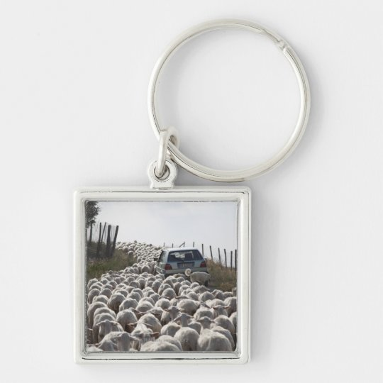tuscany farmland road, car blocked by herd of keychain