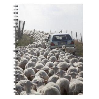 tuscany farmland road, car blocked by herd of notebook