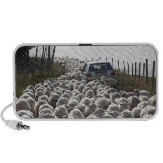 tuscany farmland road, car blocked by herd of travel speaker