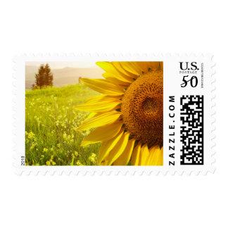 Tuscany Sunflowers Postage