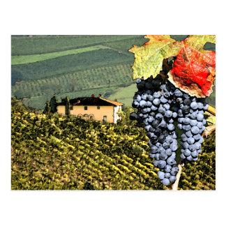 Tuscany Vineyard Postcard