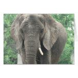 Tusked Elephant  Greeting Card