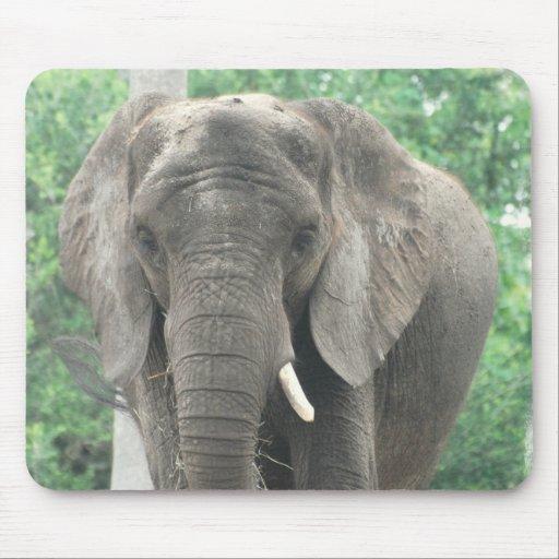 Tusked Elephant  Mouse Pad