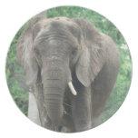 Tusked Elephant  Plate