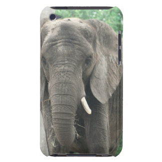 Tusked Elephants iTouch Case iPod Case-Mate Cases