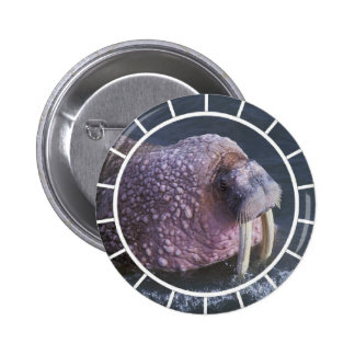 Tusked Walrus Round Button