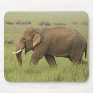 Tusker and its herd,Corbett National Park, Mouse Pad