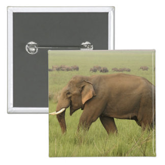 Tusker and its herd,Corbett National Park, Pinback Button