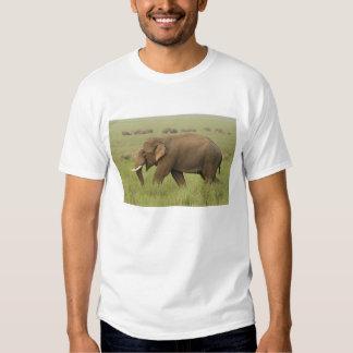 Tusker and its herd,Corbett National Park, Shirt