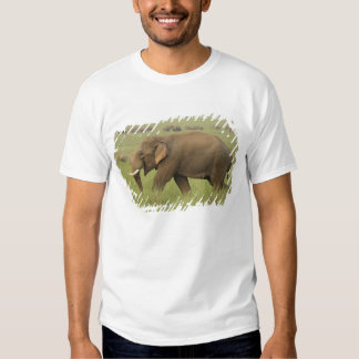 Tusker and its herd,Corbett National Park, T Shirt