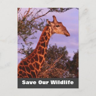Tutwa Save Our Wildlife Postcard