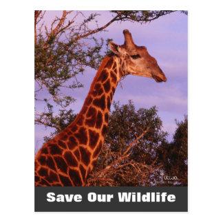 Tutwa Save Our Wildlife Postcard