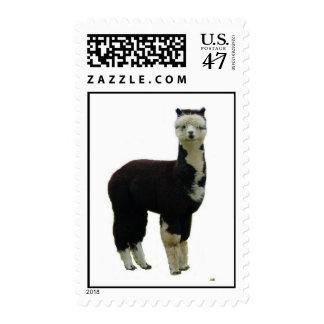 Tuxedo alpaca postage stamp
