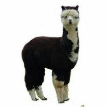 Tuxedo Alpaca Statuette