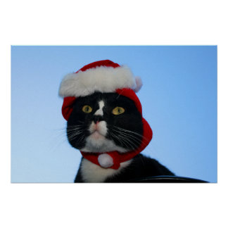Tuxedo black and white cat with santa hat on posters