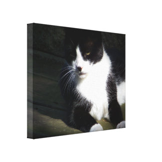 """Tuxedo Cat 20""""x16"""" Stretched Canvas Print"""
