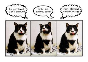 Pet Humor Kitty Feline Cards Zazzle