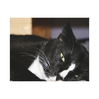 tuxedo cat black and white lying down one eye open gallery wrap canvas