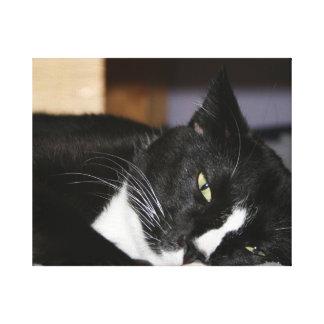 tuxedo cat black and white lying down one eye open canvas print