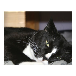 tuxedo cat black and white lying down one eye open personalized flyer