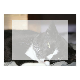 tuxedo cat black and white lying down one eye open 5x7 paper invitation card