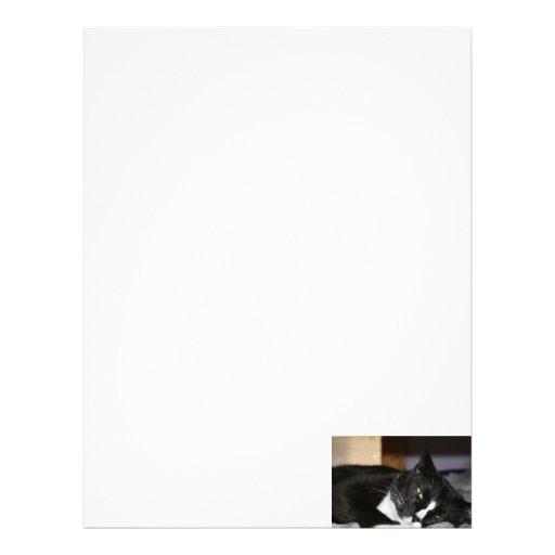 tuxedo cat black and white lying down one eye open custom letterhead