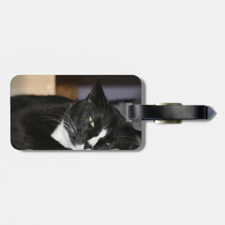 tuxedo cat black and white lying down one eye open luggage tag