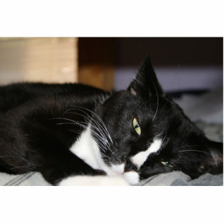 tuxedo cat black and white lying down one eye open cut outs