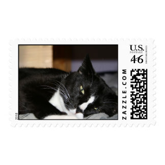 tuxedo cat black and white lying down one eye open postage stamp