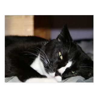 tuxedo cat black and white lying down one eye open postcard