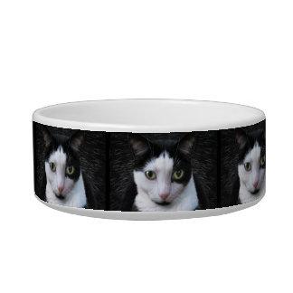 Tuxedo Cat Bowl
