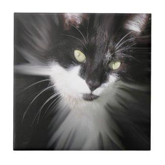 Tuxedo Cat Ceramic Tile