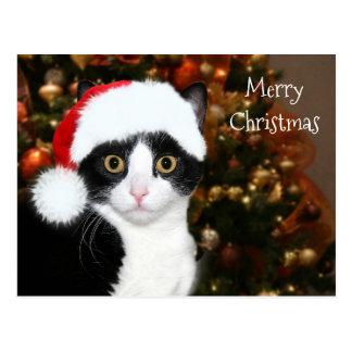 Tuxedo cat Christmas Postcard