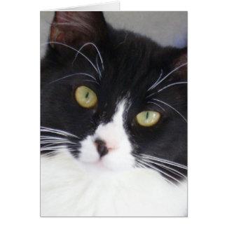Tuxedo Cat Face Greeting Card