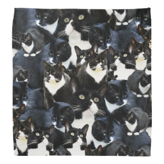 Tuxedo Cat Madness Bandana