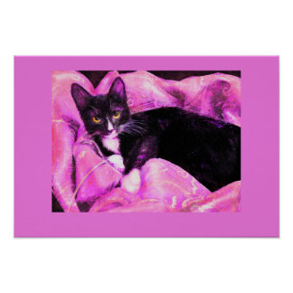 tuxedo cat on pink and purple poster