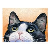 Tuxedo Cat Postcard