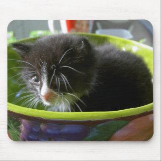 Tuxedo Cat, Tuxedo Kitten, Tuxedo Kitty, Black, Wh Mouse Pad