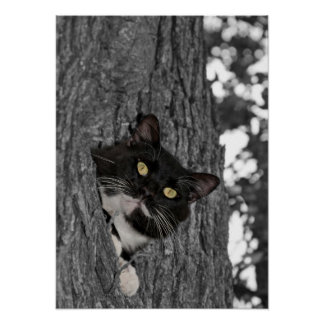 Tuxedo cat up in a tree poster