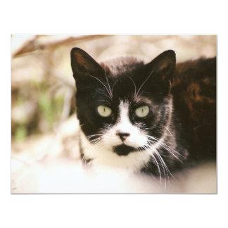 """Tuxedo Feral Cat Invitations 4.25"""" X 5.5"""" Invitation Card"""