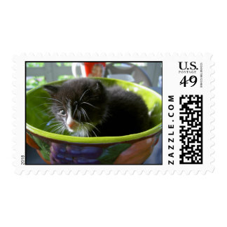 Tuxedo Kitten Cat Cute Baby Kitty with Whiskers Postage Stamp