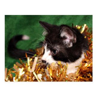 Tuxedo kitten Christmas Postcard