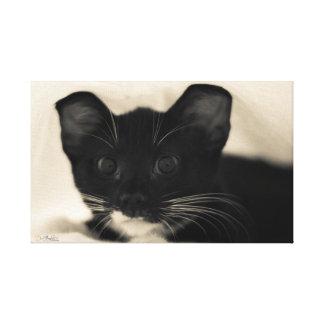 Tuxedo Kitten Cuteness Stretched Canvas Print