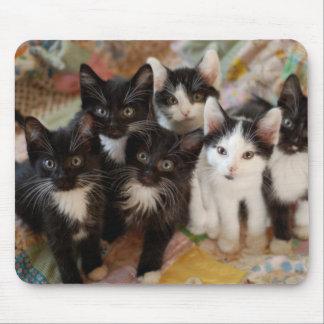 Tuxedo Kitten Group Mouse Pad