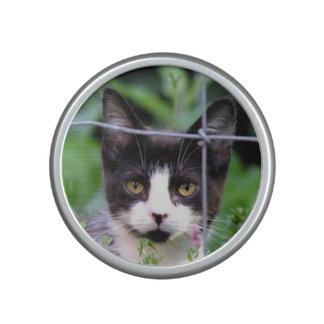 Tuxedo Kitten in the Garden Bumpster Speaker