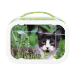 Tuxedo Kitten Lunchbox