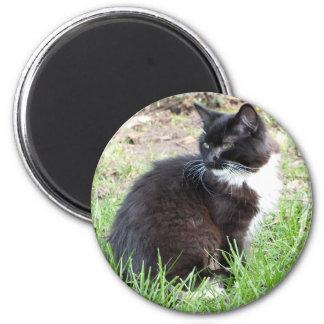 Tuxedo Kitten Magnet